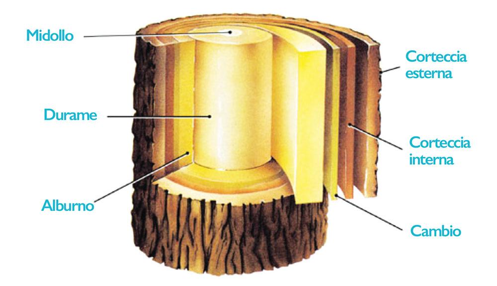 cannella-corteccia